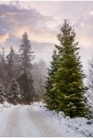 road through snowy forest on foggy morning. beautiful nature scenery in winter