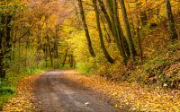 road turnaround in autumn forest. beautiful nature scenery with lots of colorful foliage on hillside