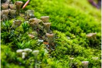 small toxic mushrooms in the moss closeup. beautiful but poisonous nature aliens