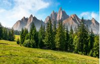 spruce forest on grassy hillside in mountains with rocky peaks. gorgeous composite image of summer landscape. strengths and eternity concept