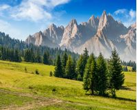 spruce trees on grassy hillside in mountains with rocky peaks. beautiful composite summer landscape.
